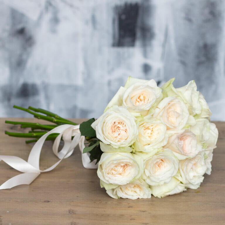 White O'Hara пионовидная французская роза нежного белого цвета