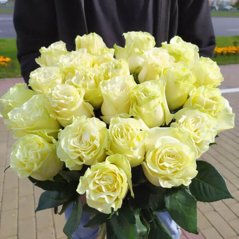 Капризная красавица или как приручить непокорную розу Мондиаль