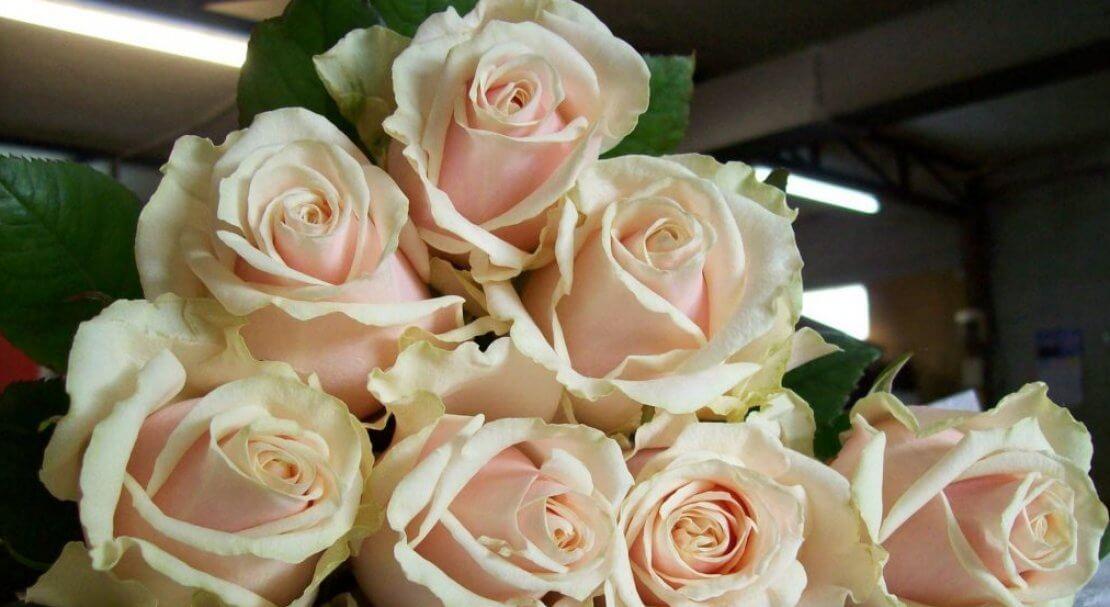 Талеа роза