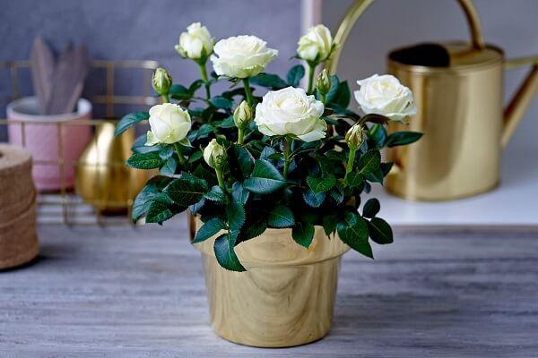 Чарующий запах идеального растения