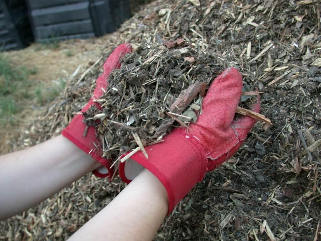 Мульчировать почву под кустами роз