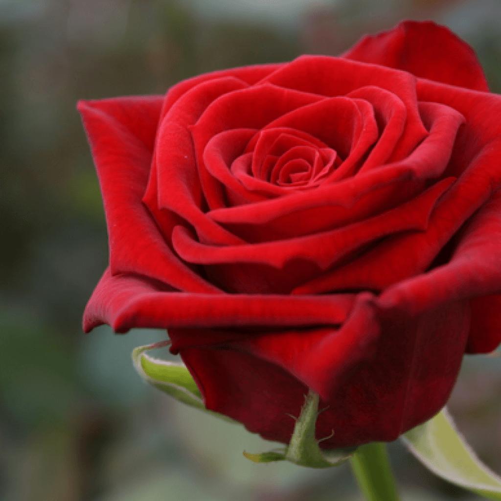 Ред Наоми