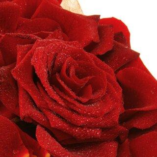Grand Prix — благородная темно-бордовая чайно-гибридная роза из Голландии