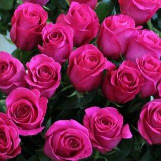 Topaz – изящная чайно-гибридная роза насыщенного розового цвета от Tantau