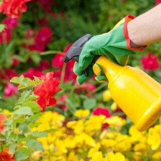 Обработка роз от вредителей и болезней