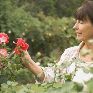 Как я ухаживаю за розами