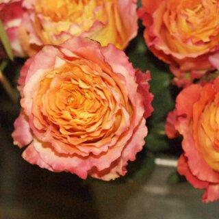 Free Spirit – роза с оригинальной расцветкой