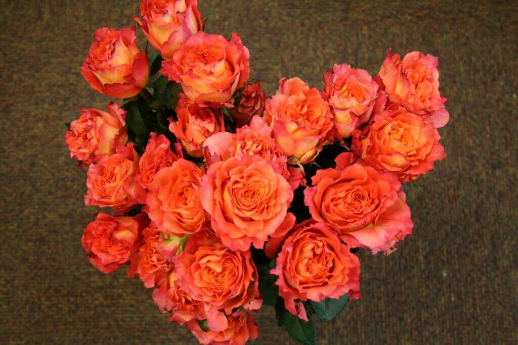 Free Spirit роза