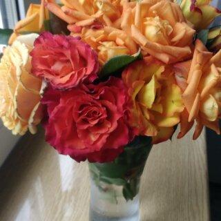 Новая фотография от посетителя к сорту Apache – яркая двухцветная чайно-гибридная роза от W. Kordes & Sons
