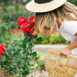 Изысканный и неповторимый аромат роз