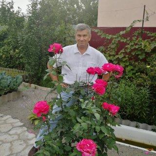 Новая фотография от посетителя к сорту Пароле (Parole) — роза необычной красоты, сильнорослый чайно-гибридный сорт
