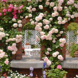 Исторические розы - старинные сорта в современных садах